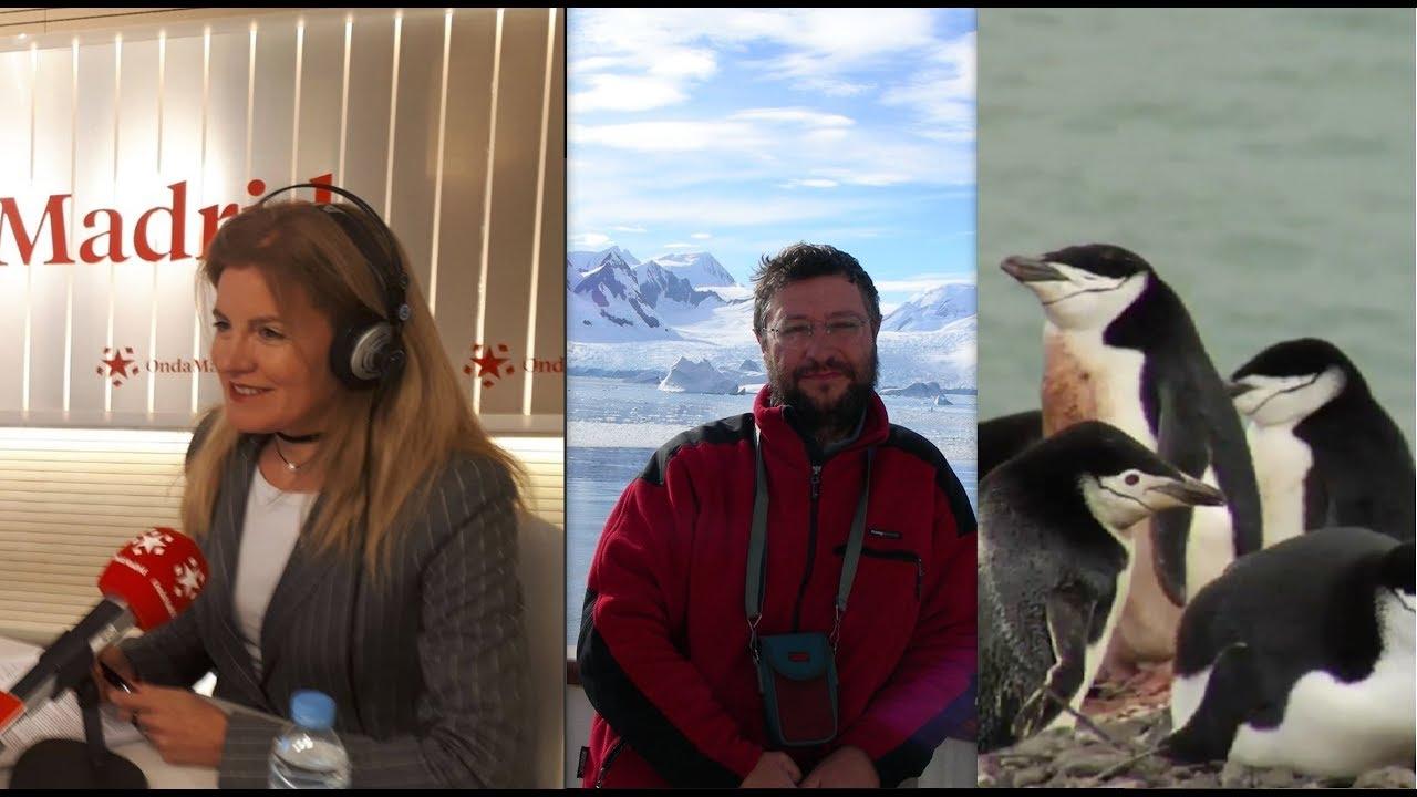 Los-niveles-altos-de-contaminantes-en-la-Antártida-preocupan-cada-vez-más-a-los-científicos