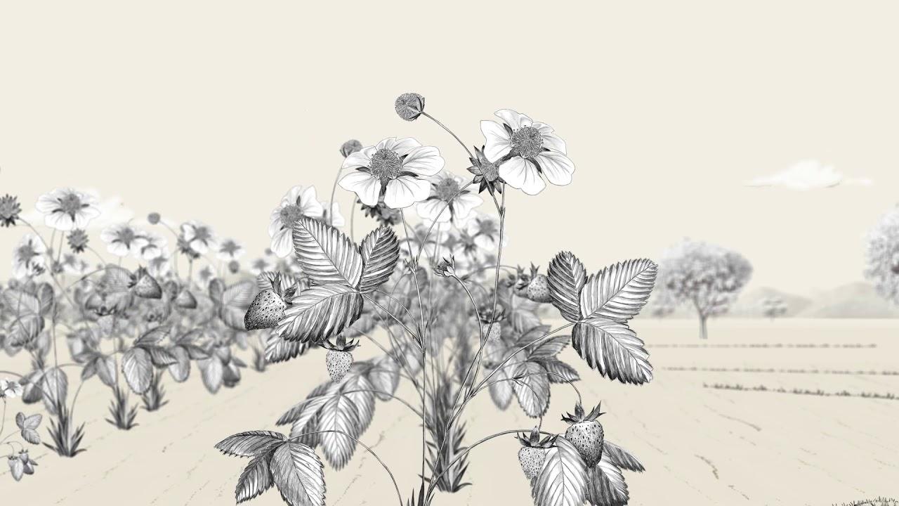 ¿Por-qué-son-esenciales-polinizadores-como-las-abejas
