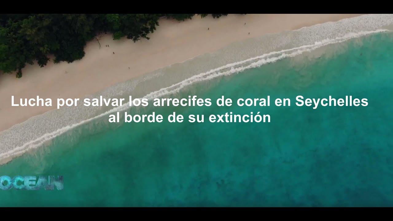 Lucha-por-salvar-los-arrecifes-de-coral-en-Seychelles-al-borde-de-su-extinción